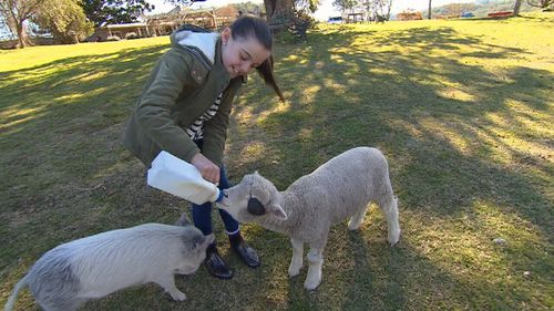 The Brewers feed a bunch of joyful rescue animals on their property.