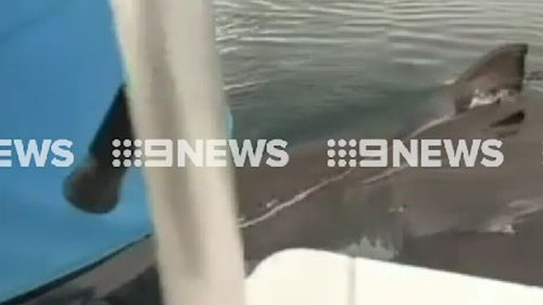 Mr Brown was fishing off Dunsborough Bay when the shark approached. (9NEWS)