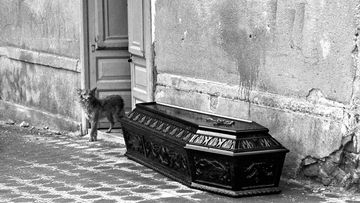 A dog watching over the coffin of his owner who died in the Belice earthquake. Poggioreale, January 1968.