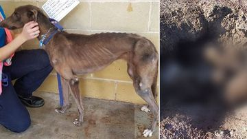 'Horrific sight': Greyhounds found in shallow grave