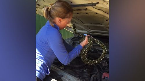 Snake handler Morgan Carolan successfully untangled the snake from the engine. (Supplied/Rebecca Pascall)