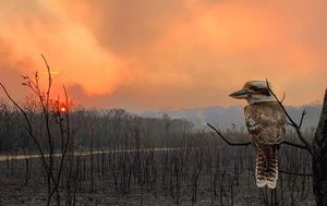 Photos of the week: Catastrophic fires, Remembrance, a sinking city