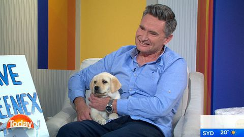 Dave Hughes is here to save the Kleenex puppy