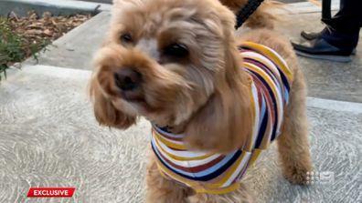 Oscar the dog is the subject of a custody battle.