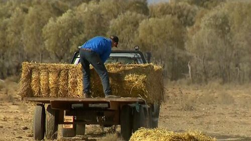 The $500,000-worth of hay will come as a much-needed helping hand to struggling farmers who are battling to feed their livestock.
