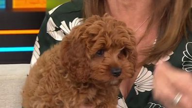 Warning over 'sophisticated' puppy scams