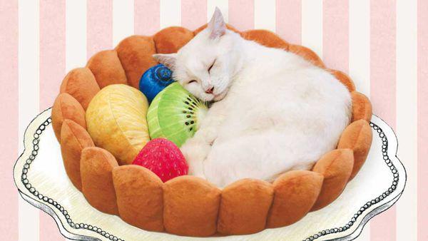 The fruit tart cat bed