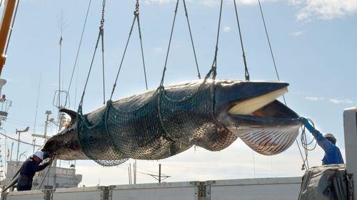 Australia to oppose Japan's whaling plan