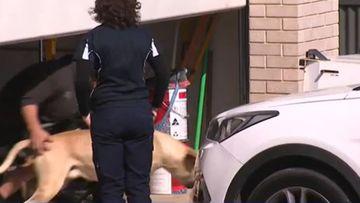 Gawler South, Adelaide dog attack