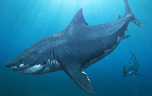 The true size of the ancient shark megalodon revealed