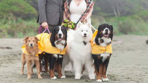 The dogs behaved for the couple on the wedding day. (Stephanie Steiner Photography)