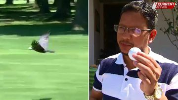 Man hit in head by golf ball says 'don't blame the birds'