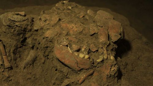 Fragmentary remains of the girl's skull were used to retrieve her DNA.