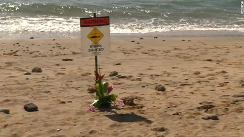 Signs warning swimmers of sharks in the area