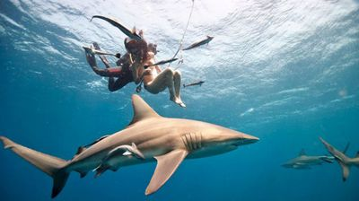 Here, another diver helps her onto the hook as swarms of sea creatures surround them.