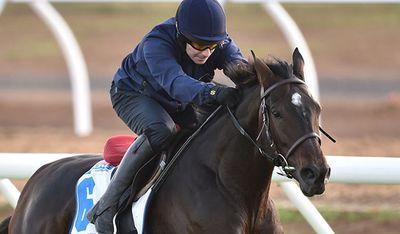 <p>Max Dynamite (FR)</p><p>Jockey Frankie Dettori</p><p>Trainer William Mullins</p><p> Barrier 2</p>