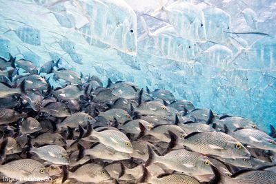 'The Disappearing Fish', Iago Leonardo (Spain)