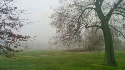 Just some fog in a park (@jaysonb485)