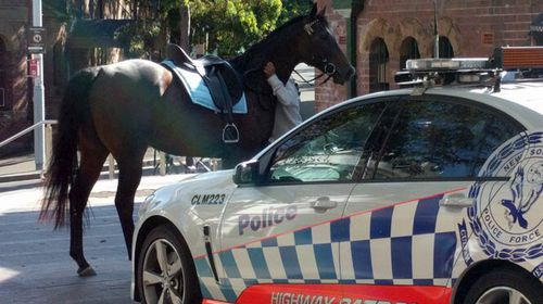 Rogue horse bolts through Sydney CBD on Cup day
