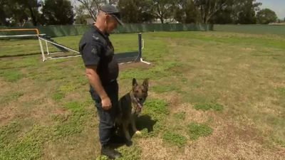 Dog squad deaths leave Victoria Police heartbroken