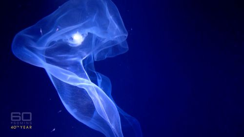 The filmmaker's trips to the deepest parts of the ocean have captured some stunning images. (60 Minutes)