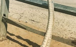 Shark spine found on US beach after storm