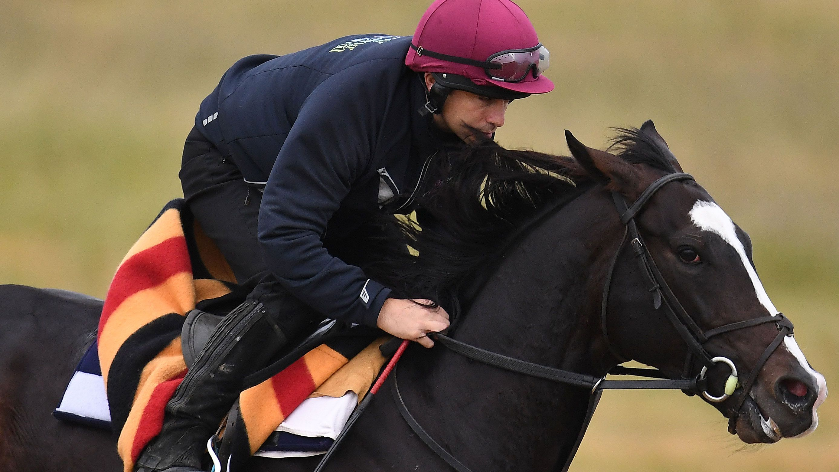 Melbourne Cup 2018: The horses Nine's talent are backing