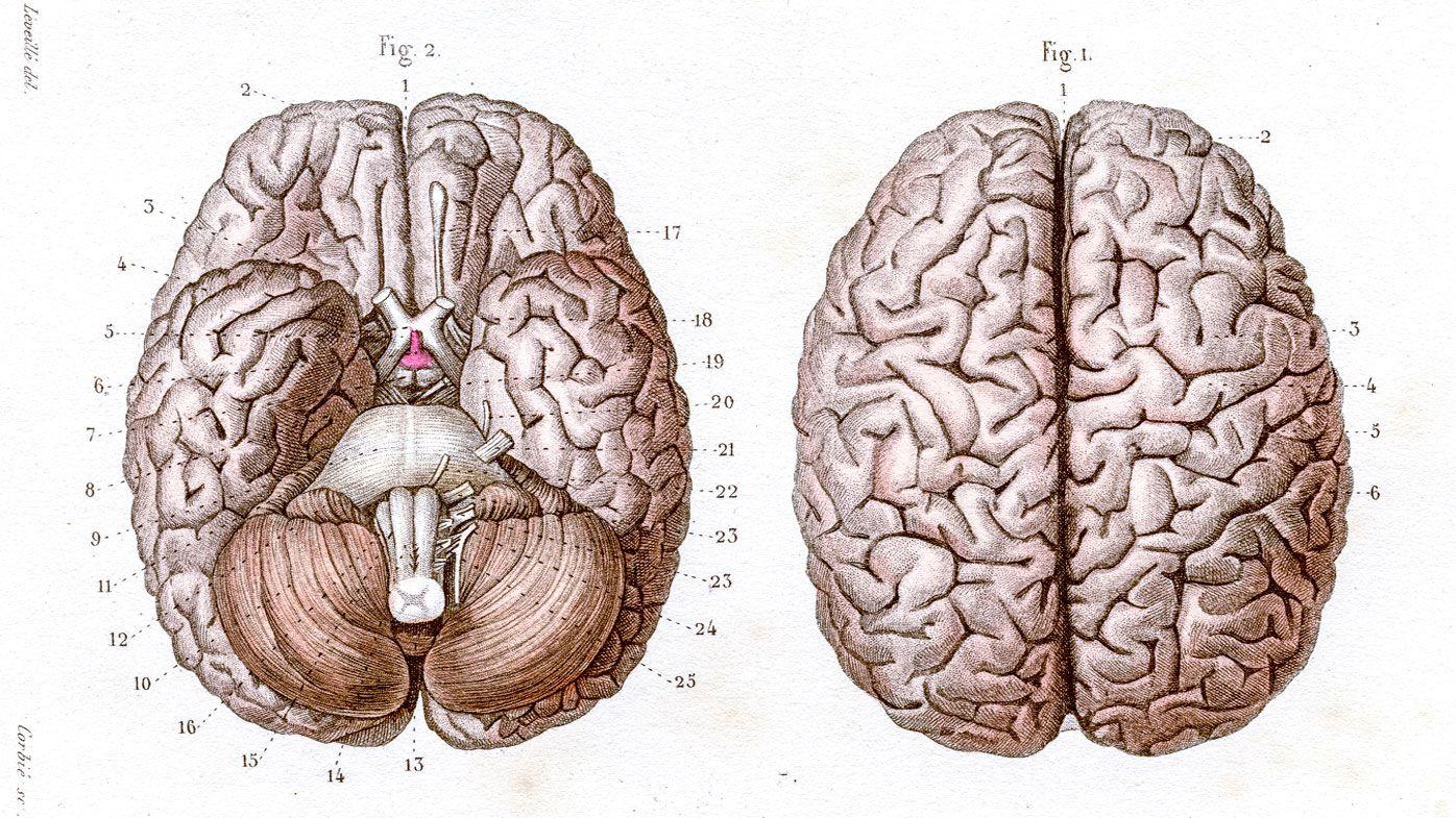 ¿Qué es la PNL y puede mejorar realmente su cerebro (y la vida)? - 9Honey 1