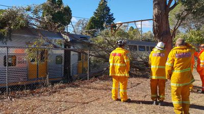 Train delays as tree crashes onto wires