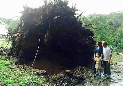 Liberal MP Lucy Wicks, her husband Chris and daughter daughter Mollie-Joy stand next to the roots of the tree that crashed into their home.