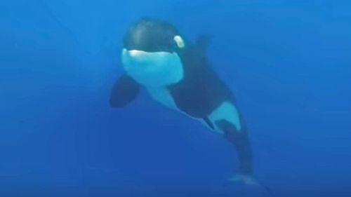 The Sydney teacher came face-to-face with a pod of killer whales last week (Rachel Stewart)