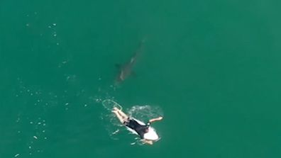 Pro surfer Matt Willkinson was paddling near Ballina when a shark swam straight at him.