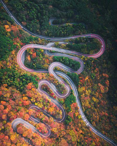 Autumn Snake, Japan - 2nd Place (2021)