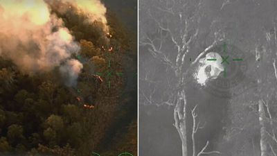 Wanted man sets bushland on fire as police chase