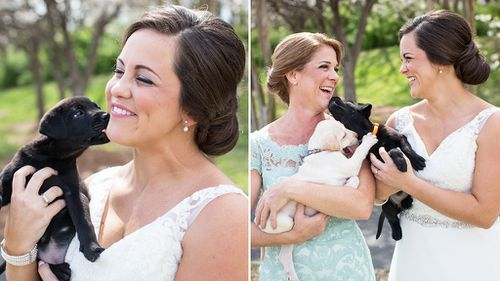 Bridal party swaps bouquets for puppies to raise pet adoption awareness