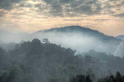 1. Bwindi Impenetrable Forest, Uganda