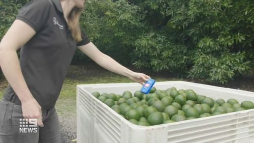 Tiny tracker could extend expiry dates of fresh food and reduce waste