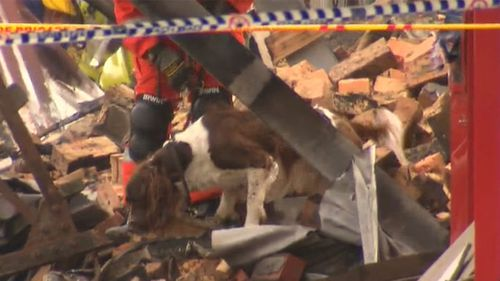 Sniffer dogs helped in the desperate search through the rubble. (9NEWS)