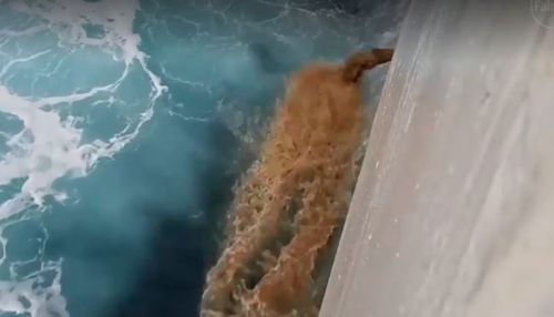 Large volumes of effluent are shown being dumped into the ocean. (Supplied: Animals Australia)