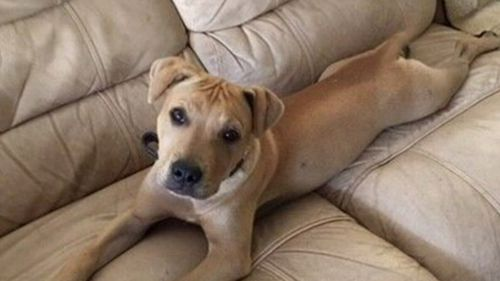 An Adelaide man has been jailed for killing his housemate's dog.