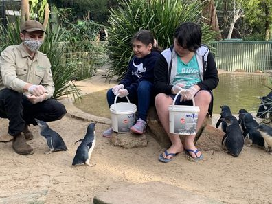 Giovanni and Caterina feed the penguins at the zoo.