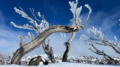 Winter wonderland in Snow Mountains