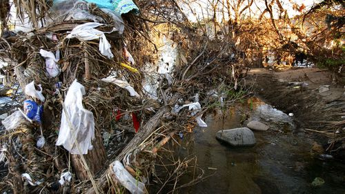 Single-use plastic bags are left hanging on trees on the bank of a river (Getty Images)