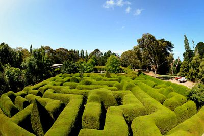 <strong>Ashcombe Maze and Lavender Gardens, VIC</strong>