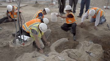 Construction workers discover dinosaur bones under building site