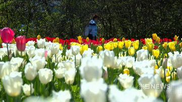 VIDEO: Floriade festival lights up Canberra weather