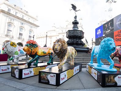 Lion sculptures on display at the launch of the Tusk Lion Trail, a global art installation in support of African conservation, on August 10, 2021 in London