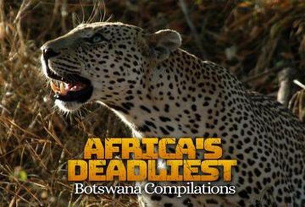 Africa's Deadliest: Botswana Compilation