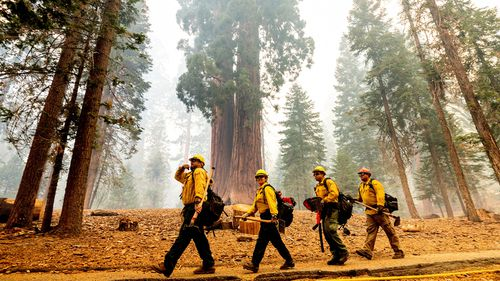 Historic drought tied to climate change is making wildfires harder to fight. It has killed millions of trees in California alone.