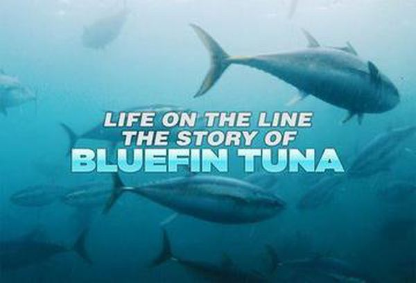 Life on the Line: The Story of Bluefin Tuna